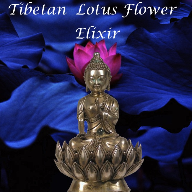 tibetan lotus flower elixir tincture bottle gourd herbs