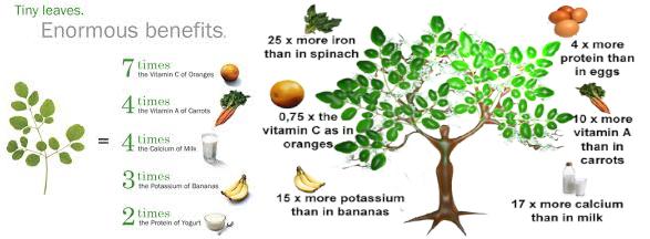 moringa bottle gourd herbs