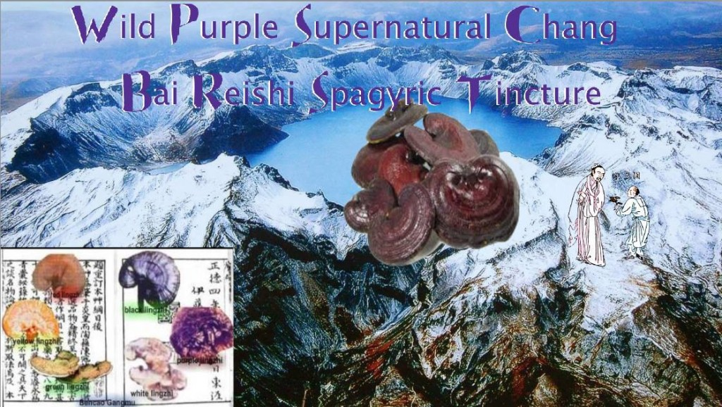wild purple supernatural Chang Bai Reishi spagyric tincture