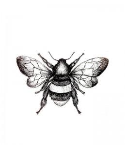 black-bee-serum